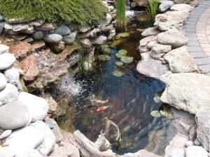 water-feature-denver